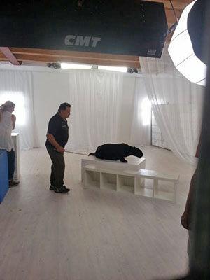 Panther Trailerdreh mit Ricarda M